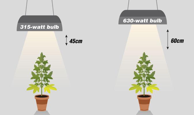 Recomendaciones para el cultivo con luces de 315W