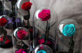 Por qué una rosa eterna no puede faltar en tu hogar