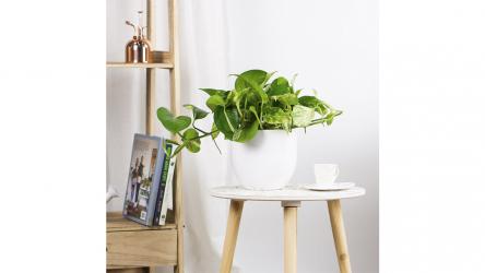 ¿Buscas regalar una poto planta? Te contamos todo lo que debes saber
